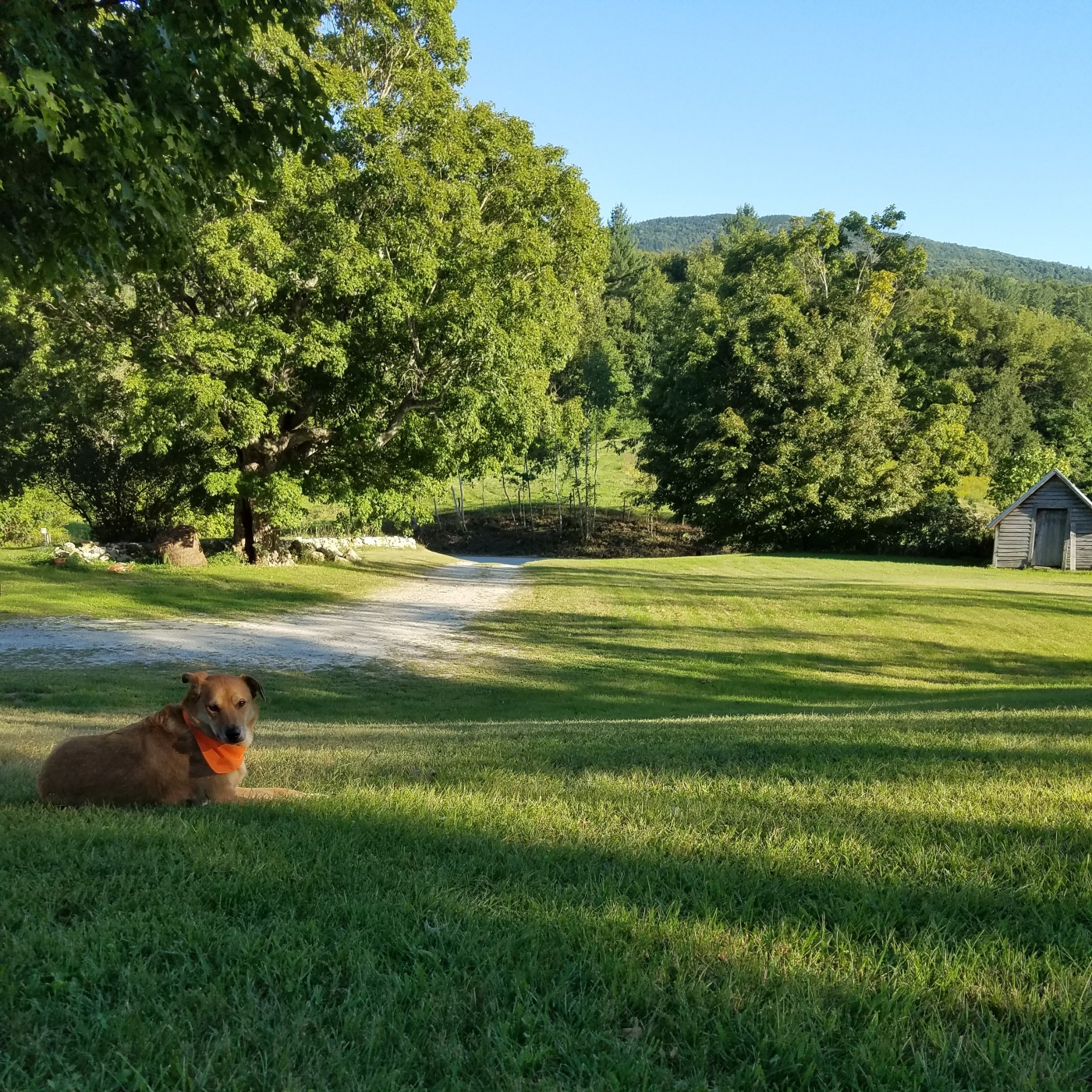Better Beauty Vermont Dog relaxing on lawn