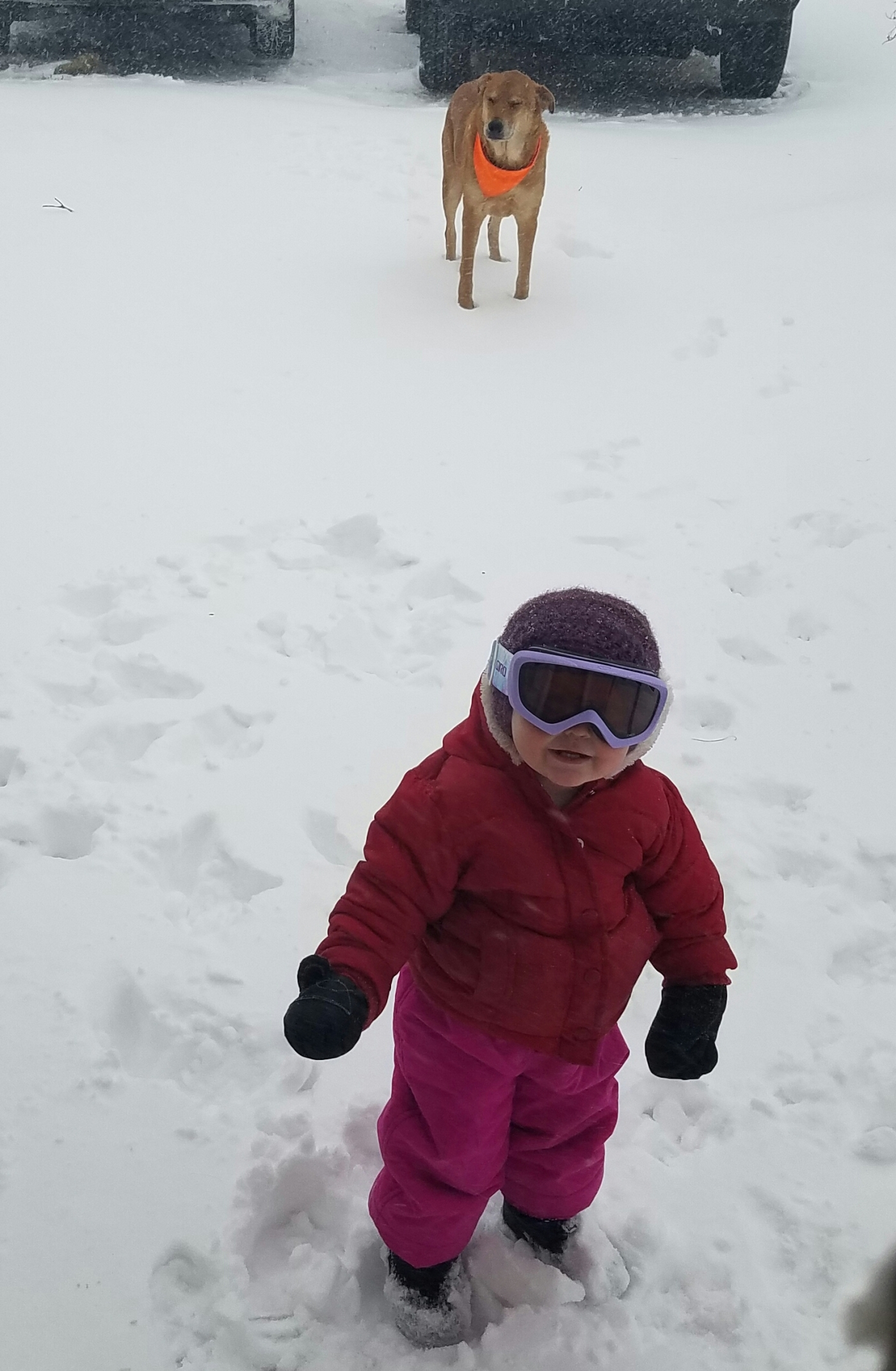 Better Beauty Vermont Toddler in Blizzard