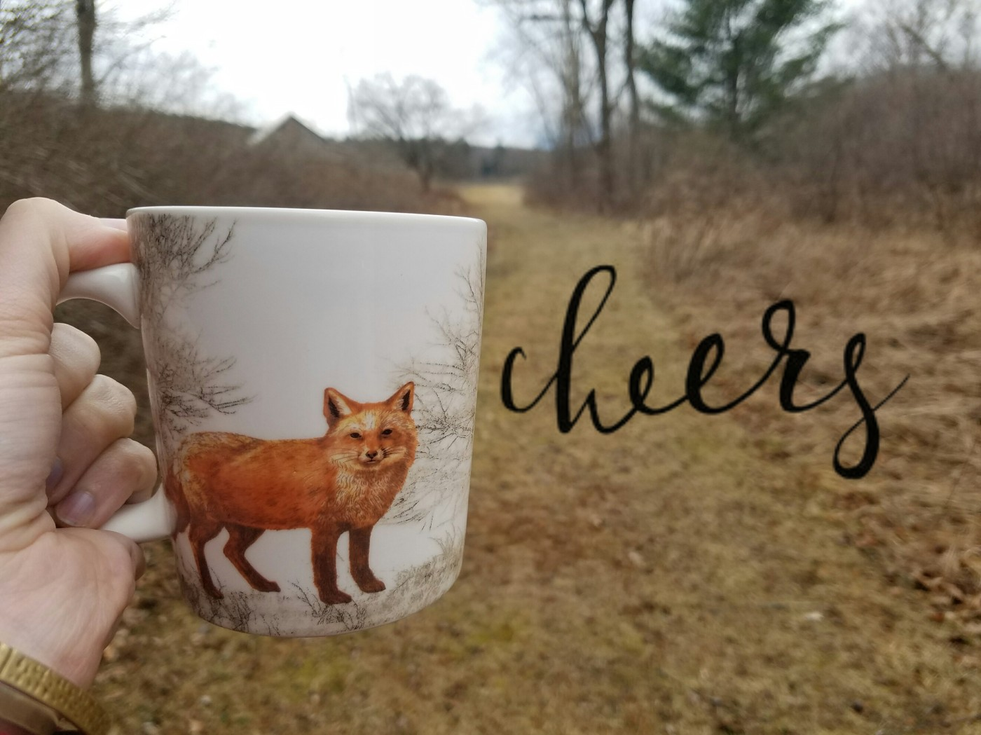 Better Beauty Vermont Fox Cheers