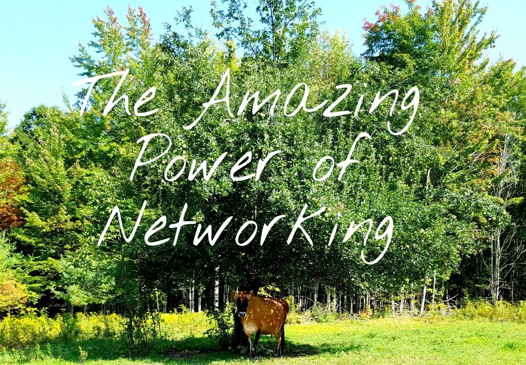 Better Beauty Vermont- the amazing power of networking