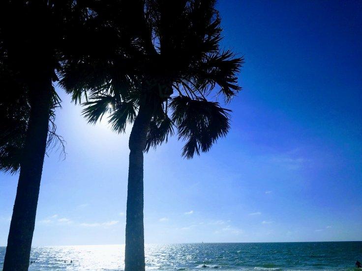 Better Beauty Vermont palm tree